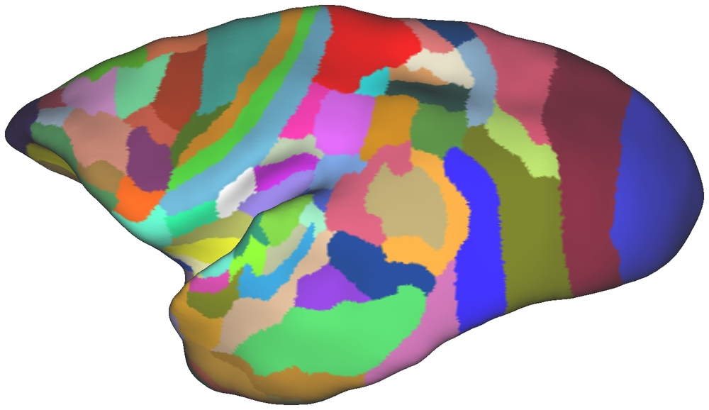 The patches represent anatomical areas in the brain of the marmoset. In Paxinos et al. (2011) The Marmoset Brain in Stereotaxic Coordinates.