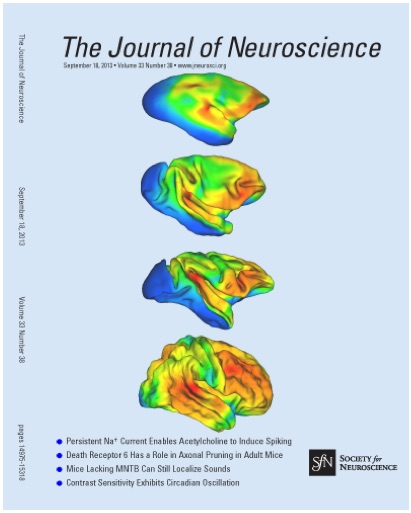 This figure illustrating brain areas that are expanded in the course of evolution was used as the cover of the 18 September 2013 issue of The Journal of Neuroscience.  In Chaplin et al. (2013) Journal of Neuroscience 33: 15120-15125.