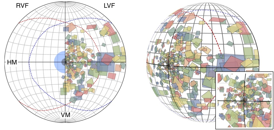 Results of a brain mapping experiment. The polygons are the parts of the visual field encoded by neurons in the visual cortex. The are plotted on the sphere and on projections to the 2D plane. In Yu et al., (2015) Neuroscience Research 93:47-61.